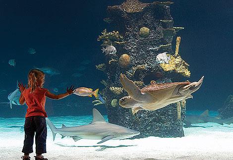 newport_aquarium